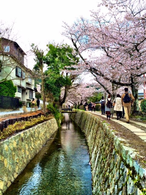 The Philosopher's Path is a lovely stroll that takes you along a stream.  It is known for the sakura (cherry blossom) trees that line it.